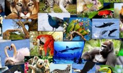 Познаем животный мир с библиотекой «Зеленый мир»
