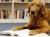 Книжная выставка «Все о собаках» вбиблиотеке им. В. Г. Короленко